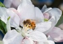 Have your say on bees and pollination