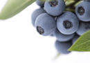 Plant & Food Research licenses blueberry varieties to T&G